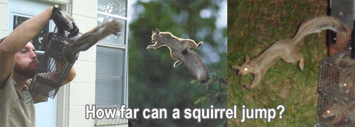 How Far Can A Squirrel Jump