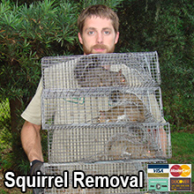 Colorado Springs Squirrel Control